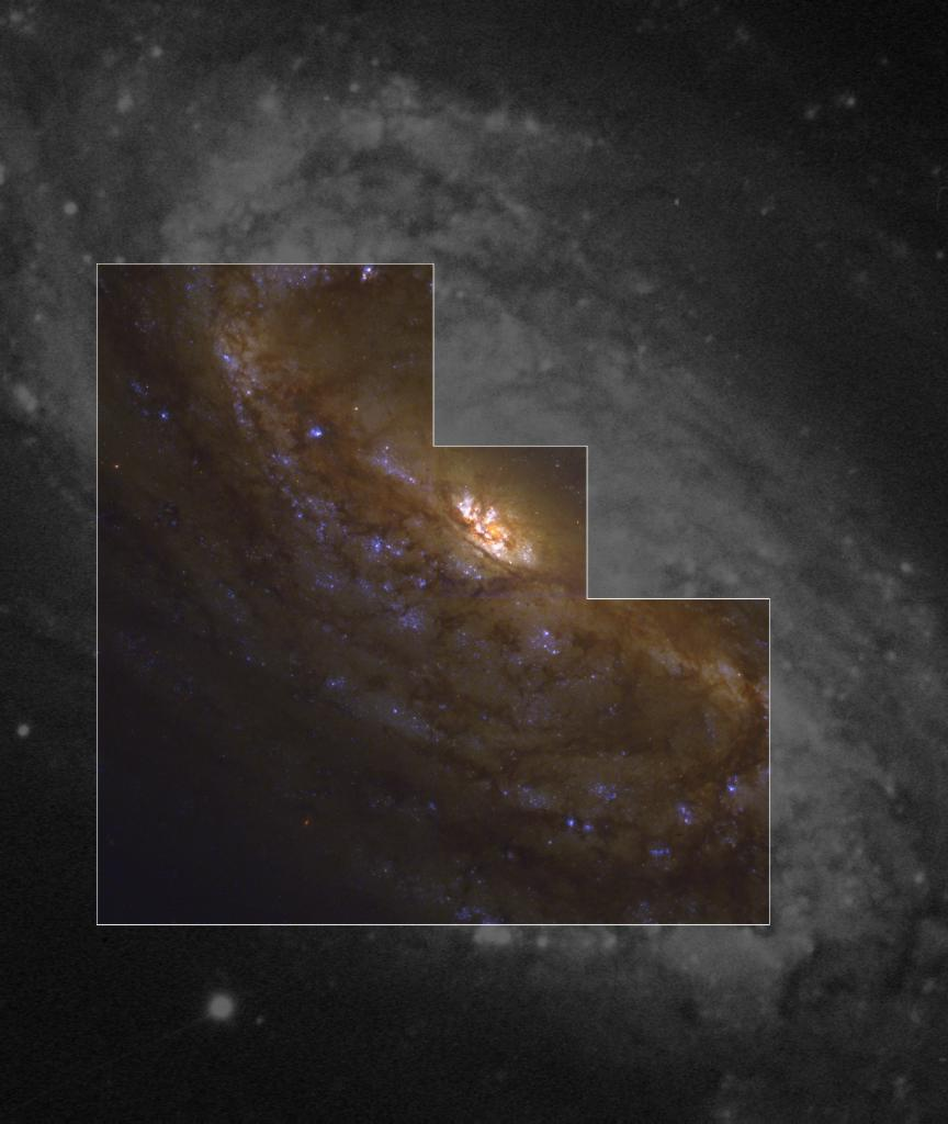 NGC2903hst.jpg