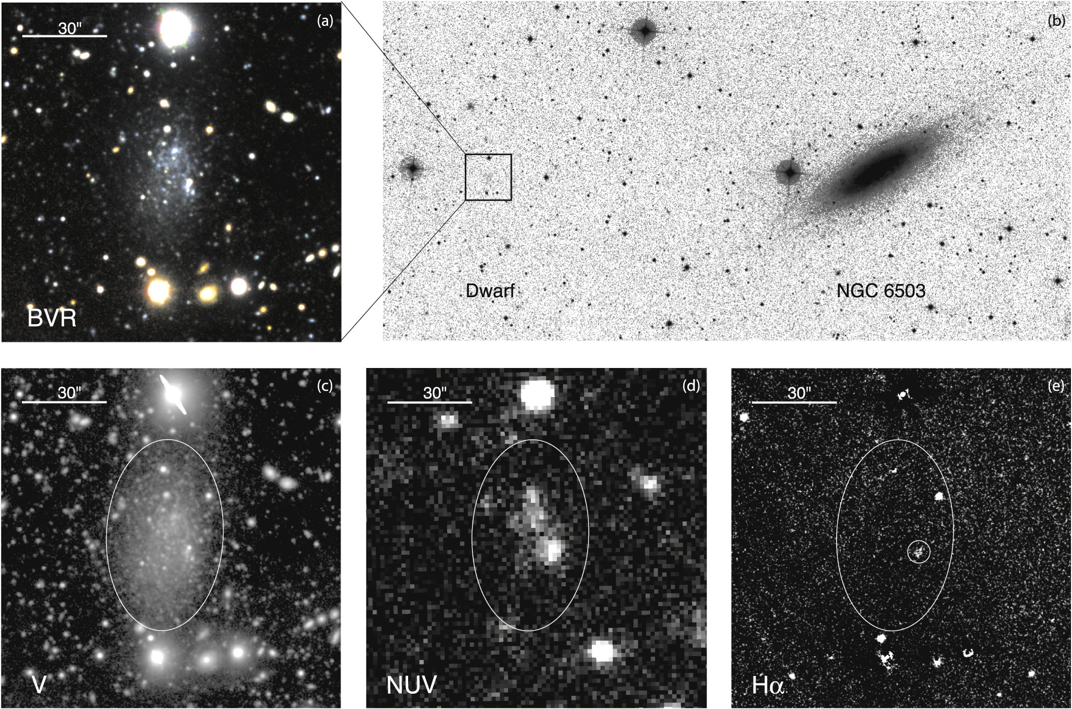 NGC6503-d1